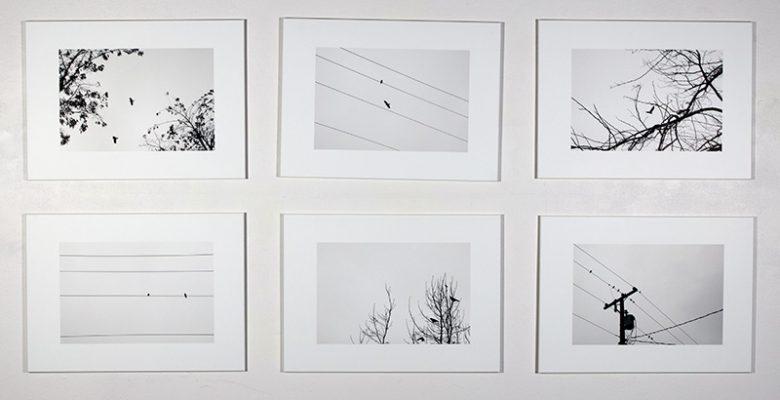 "Cobi Timmermans, ""To the Birds"", Digital Prints, 2019"