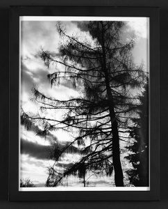 "Jeff Stackhouse, ""Tree,"" Black and white photograph, 15"" x 11 3/4"", 2005, Accession number: 2005.005.002"